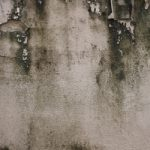 10 Tips To Prevent Basement Mold!