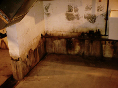 Top 15 Mold Prevention Tips: Mold growth can be prevented. This article list the top 15 mold prevention tips, to help you live in a mold free home.