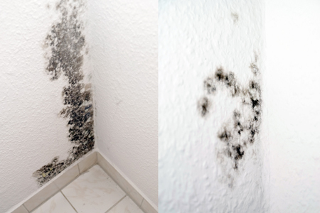 What Can I Do If Have Mold In My Apartment Steps Residents Of