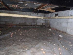 Top 3 Reasons Your Crawlspace Has Mold: Top 3 Reasons Your Crawlspace Has High Humidity. This article explains why your crawlspace is humid, why this leads to mold and how you can fix the problem!
