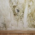 How Do I Prevent Mold In My Basement?