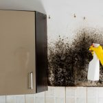 10 Clues You Called An Inexperienced Mold Removal Contractor!