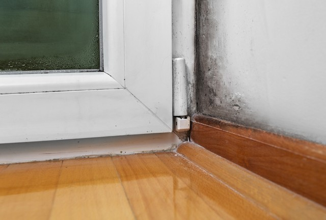 Top 10 Tips To Prevent Basement Mold!