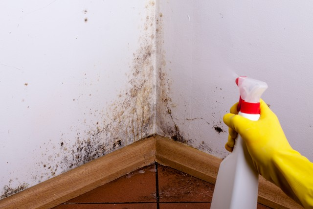 Image result for Why Mold in the House is Dangerous and Must be Removed