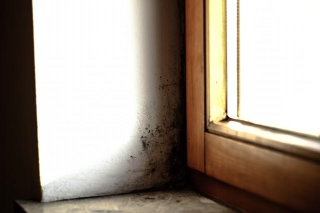 Brown University Study on Mold and Depression!
