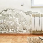 Got Mold? Hire A Professional!: In this article we explain why you should always hire a professional to remove mold from your home or business, listing the 8 steps necessary to properly remediate mold. In addition, we list 10 questions that you need to ask any contractor you consider hiring. Get YES answers to these 10 questions, particularly, questions 4 and 7.