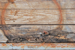 Mold Fact 2: Buildings and Homes Provide the Perfect Food For Mold