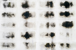 Mold Fact 5: There Are 5 Distinct Species of Mold