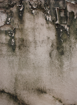 10 Tips To Prevent Basement Mold!