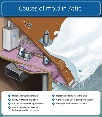 Four Common Causes Of Mold Growth In The Attic