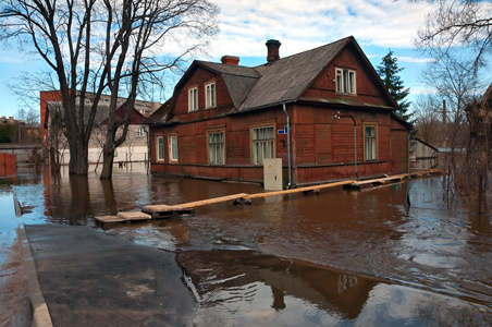 Water Damage and Mold (4 Articles)