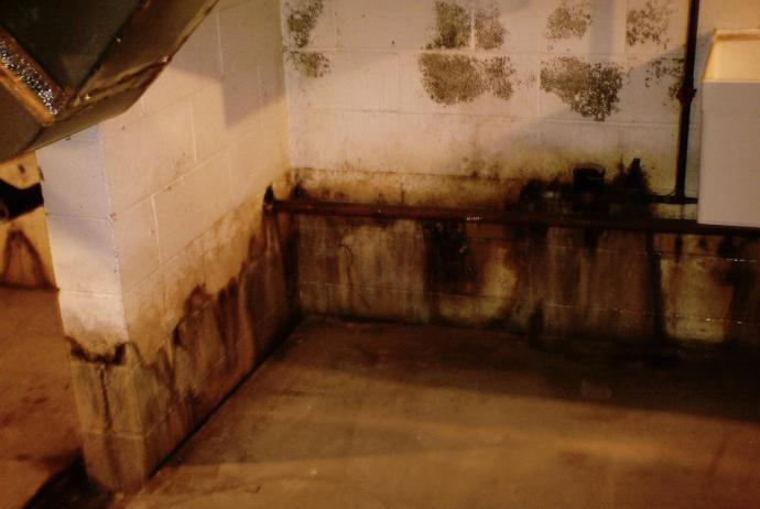 Atlanta Mold Removal Professionals