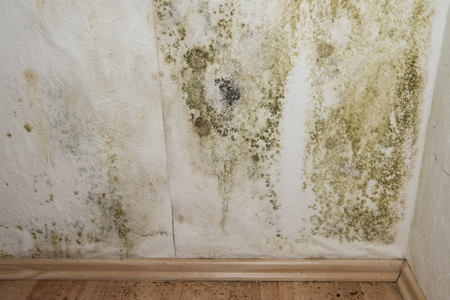 How Do I Prevent Mold In My Basement?: If you are concerned about mold in your basement or your basement was recently flooded, implement these 10 tips to prevent mold growth. Learn more!
