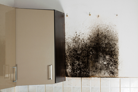 If You Find Mold In Your Business, DO NOT Try To Remove It Yourself