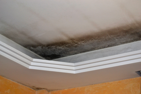 #5 The Core Problem With Mold Is That It Can Grow Undetected!