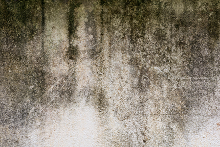 Why Does My Basement Smell Bad?