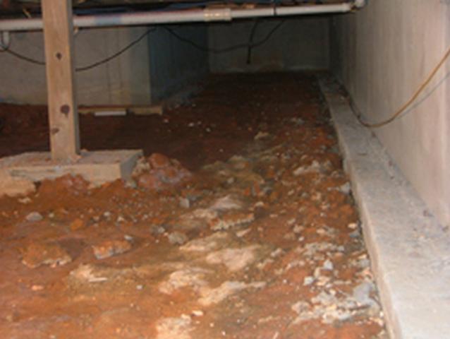 Mold Fact 6: Most Mold Is Hidden
