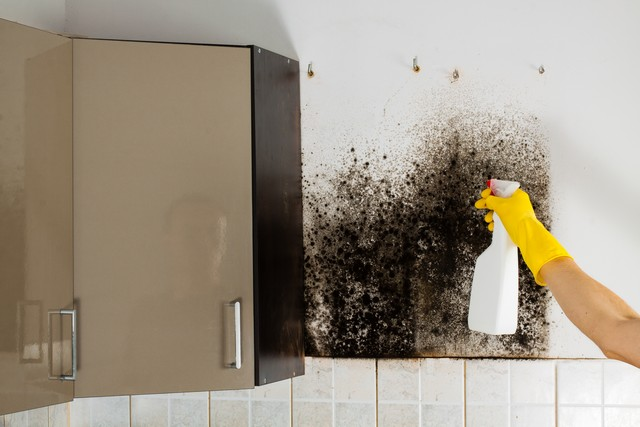 10 Clues You Called An Inexperienced Mold Removal Contractor!: This article provides you with the top 10 clues that the mold removal contractor you called is inexperience and not qualified. Clues #3, #6, and #9 are very important. Learn more!