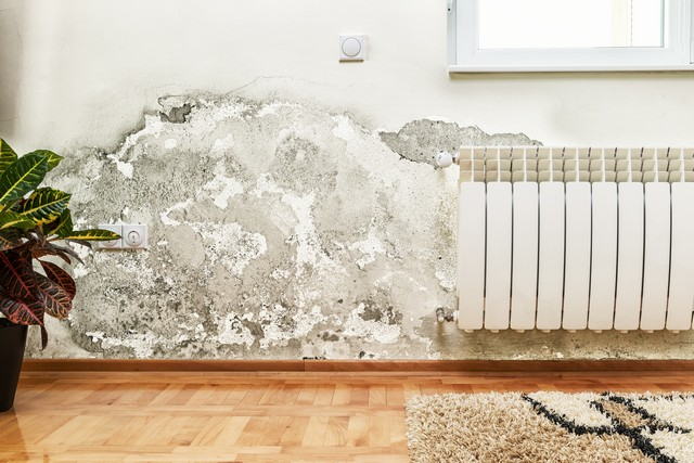 Got Mold? Hire A Professional!