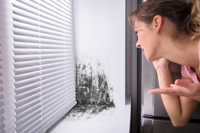 Got Mold? Call Mold B Gone, 470-545-4467!